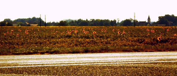17 TAGE EUROPA - Sonnenblumenfelder an der 66 Route De Lyon 29.07.2002