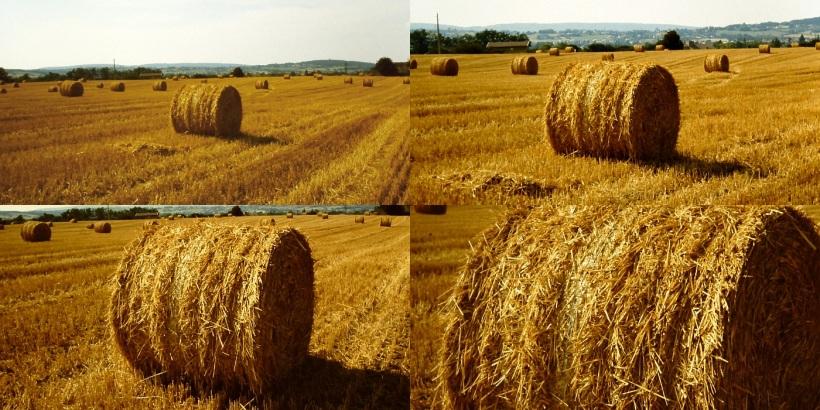 17 TAGE EUROPA - Un champ de blé fauché à lyon - 30.07.2002